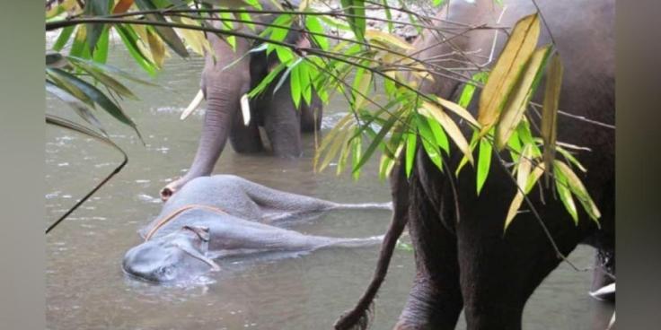 elephant_2121